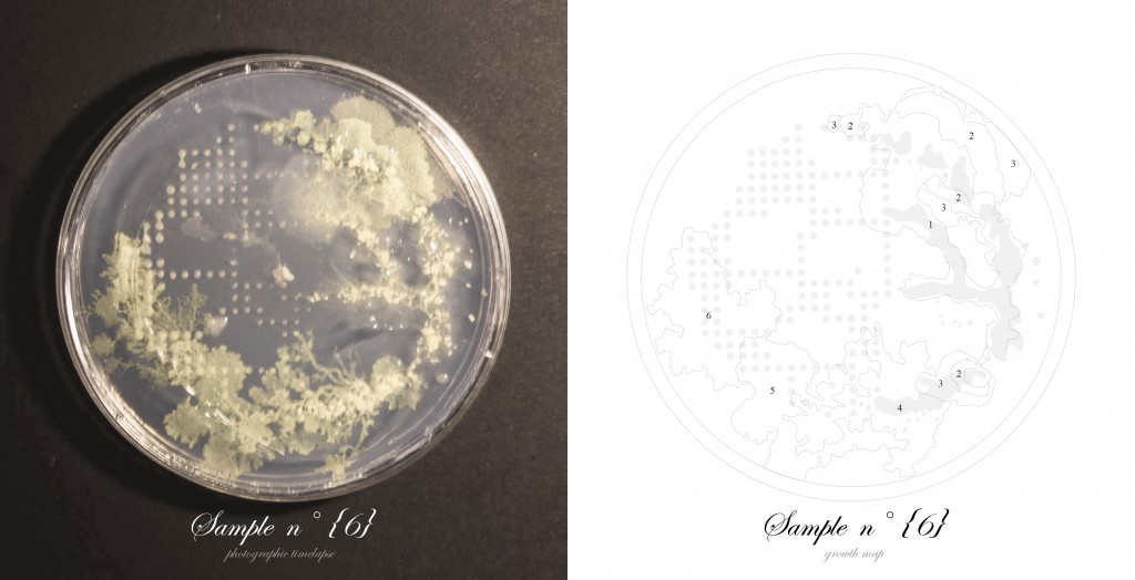 Officina-Corpuscoli-BioLogic-timelapse-overlap-frames-sample06