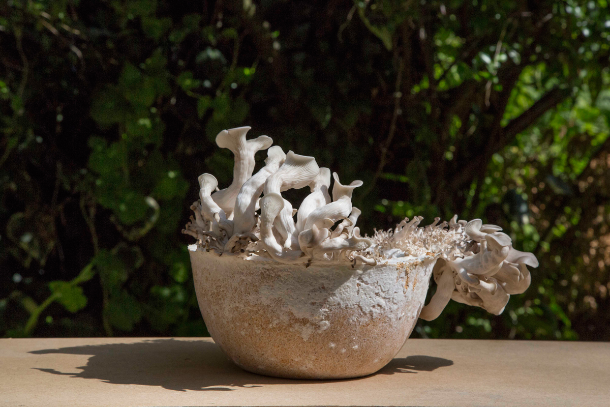 Officina-Corpuscoli_Maurizio-MontaltiMycelium-Binder---Growing-Objects