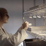 'Fungi: The Plastic of the Future' – MOTHERBOARD – VICE