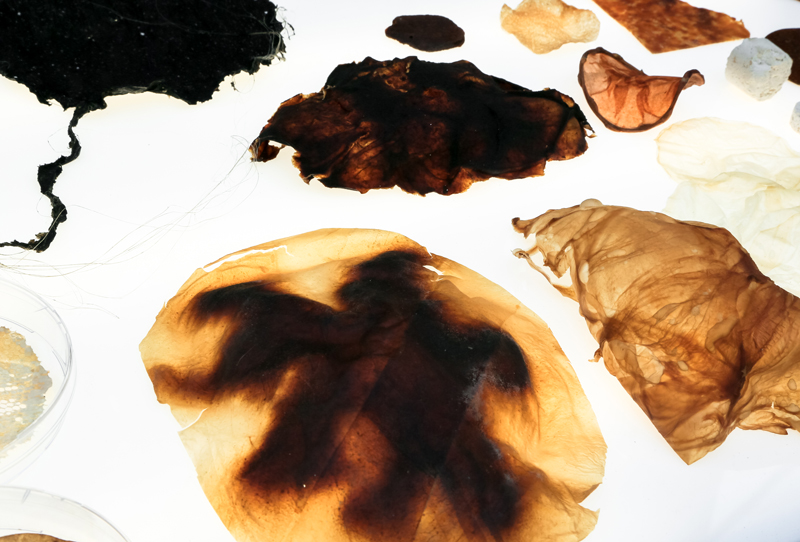 Fungal-Futures---Materials-Samples9-©Officina-Corpuscoli-_-Maurizio-Montalti
