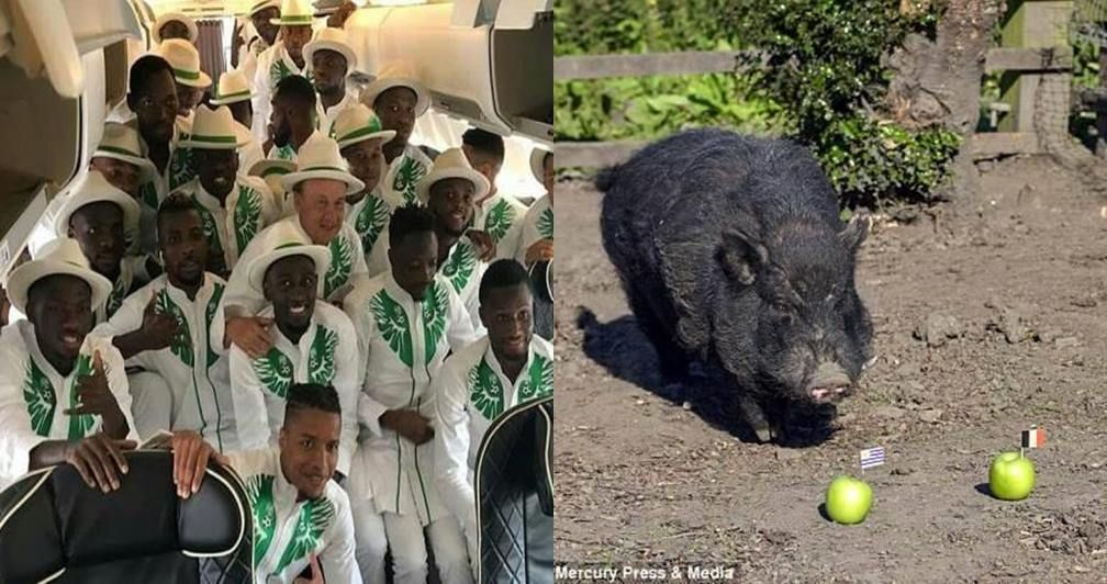 Russia 2018: Psychic pig that predicted Trump's victory picks Nigeria for semi-final
