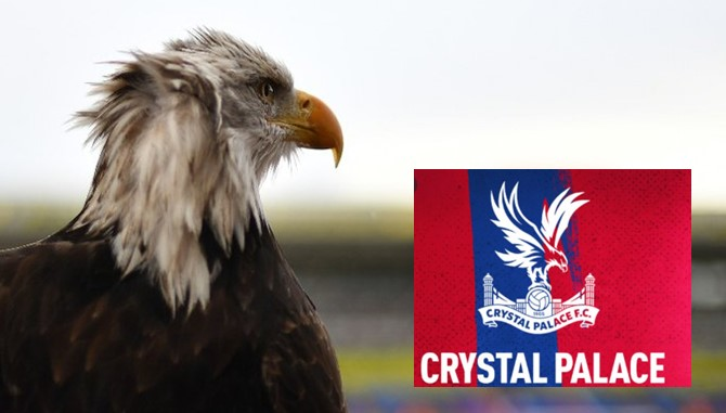 Crystal Palace eagle, Kayla dies of heart attack