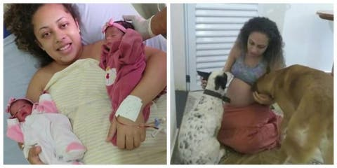 Dog kills newly born twin babies after mother leaves room to talk to neighbour