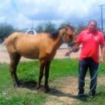 Prefeitura de Surubim recolhe animais à solta nas ruas e rodovias do município