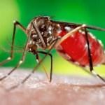Aedes aegypti já infectou 30% da população de Surubim