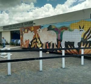 Exposição de Animais de Surubim tem início no dia 22 de agosto