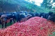 Desperdício e fome se aliam no sistema capitalista nacional
