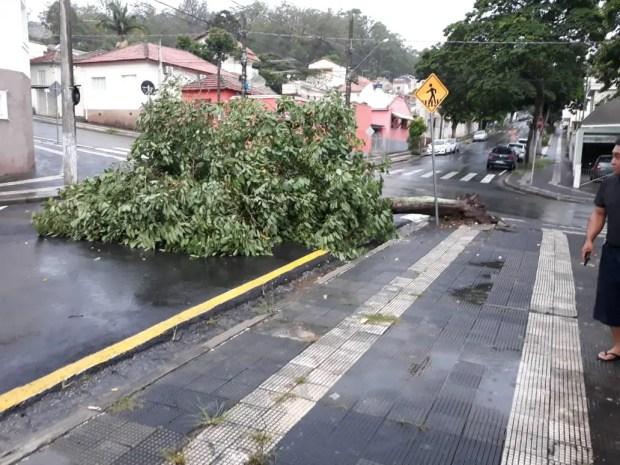 ÁrvoresMairinqueChuvaQueda Árvore Mairinque