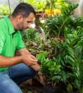 Plantas-Império dos Vasos-Urban Jungle- Urban Jungle Sorocaba-Loja de Plantas Sorocaba