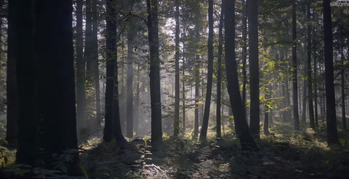 Wonderland, una historia motivadora
