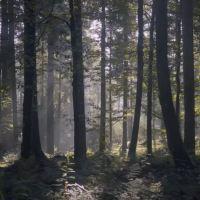 Wonderland, a motivational story