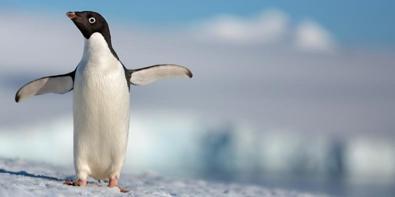 """It's always about making a great story."" – Producer Roy Conli 