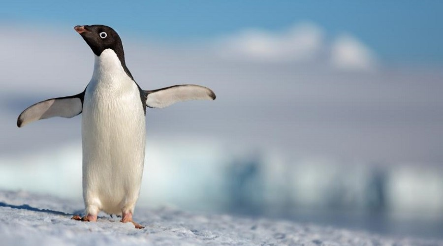 """""""It's always about making a great story."""" – Producer Roy Conli 