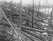 Un'immagine della foresta carbonizzata (da www.americandigest.org)