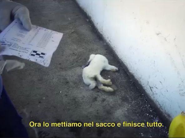 Un frame del video di Animal Equality