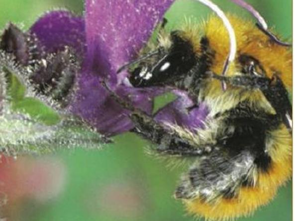 La società delle api spiegata ai bambini(e raccontata ai consumatori adulti)