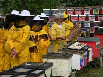 Veleni, profumi e killer silenziosi: la difficile arte degli apicoltori