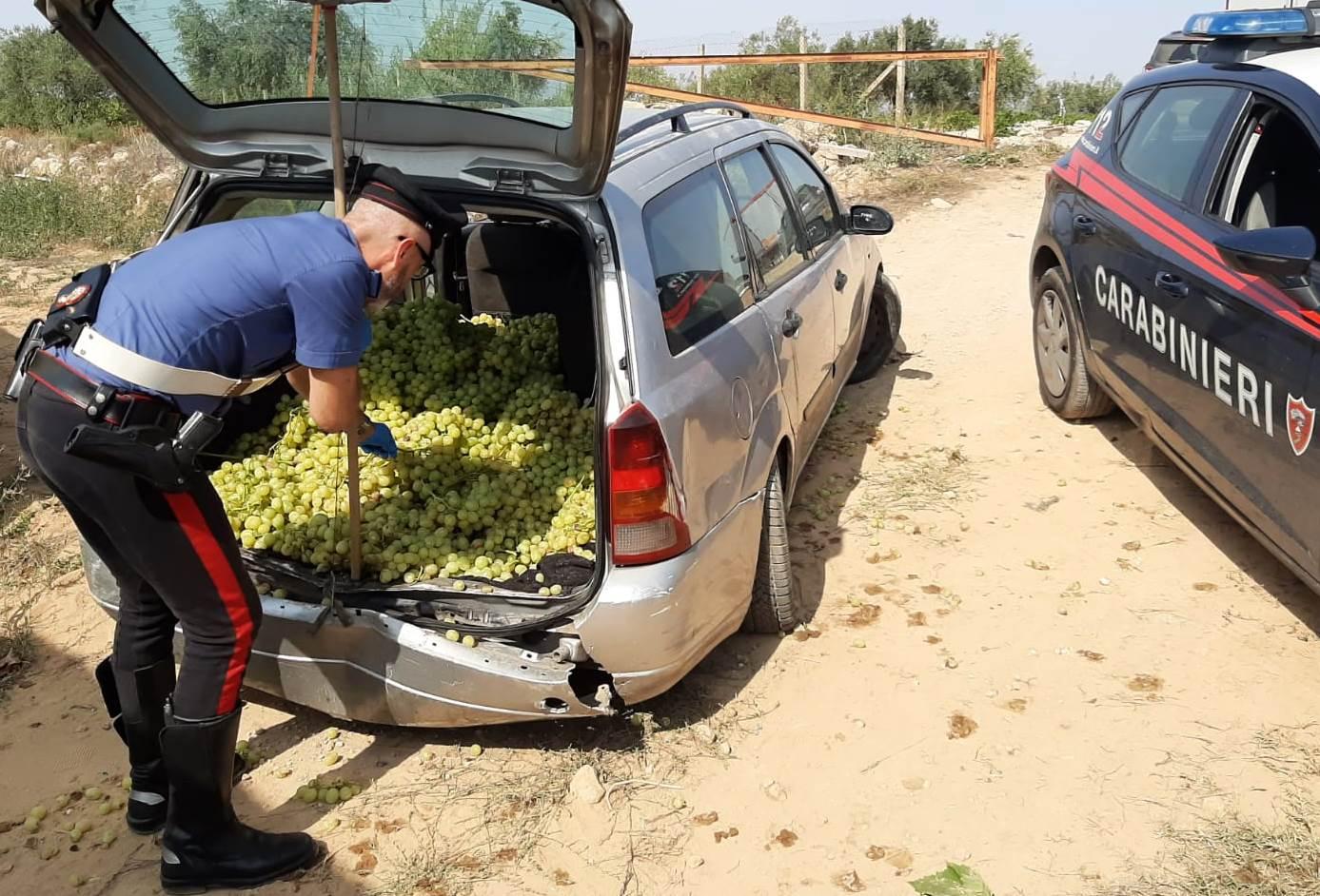 Caltagirone, 'vendemmiano' vigneto ma abbandonano auto dopo cedimento della ruota: salvati 800 kg di uva da tavola