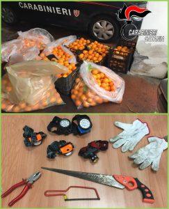 Paternò, 2 'raccoglitori' di arance sorpresi a Ponte Barca. A Belpasso denunciati in tre per possesso di chiavi e grimaldelli