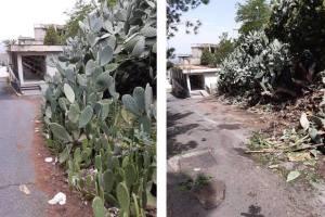 Paternò, interventi nel cimitero monumentale: via le erbacce e ripristino della pavimentazione