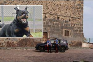 Motta Sant'Anastasia, libera il rottweiler contro i carabinieri allertati dalla moglie maltrattata: 39enne arrestato