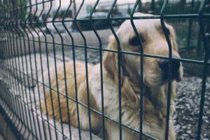 """Paternò, Marzola e Flammia sulla questione randagismo: """"Box insufficienti per i cani e molte associazioni escluse"""""""
