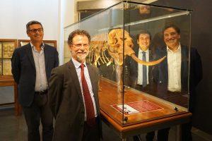 Catania, il 'Liotru' nano in mostra all'Università: vivevano in Sicilia e a Malta fino a 500 mila anni fa