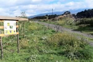 Bronte, l'antica discarica di Brignolo diventa un polmone verde: grazie a finanziamento di 497 mila euro