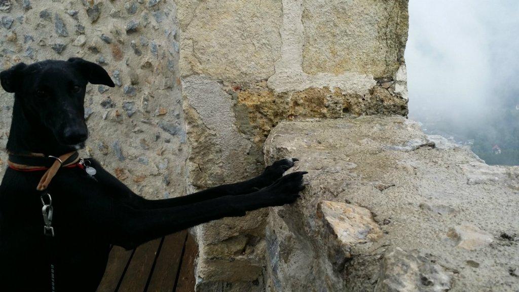 Atena in visita al castello