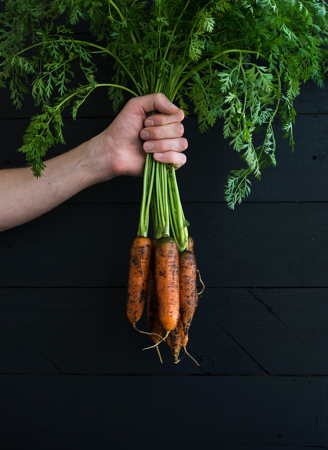 Bunch of fresh garden carrots with green leaves in the hand, black wooden backdrop.