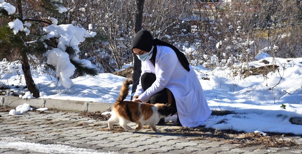 Belediye Sokak Hayvanlarını Besledi