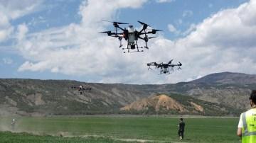 Çeltik tarlaları drone ile ilaçlandı