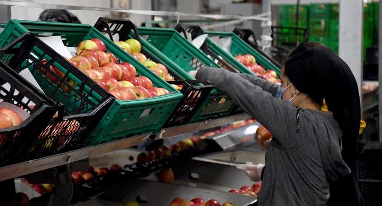 Elma bahçesinden 14 ülkeye ihracat