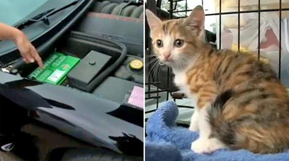 Kitten Goes for 180-Mile Ride Under the Hood of Chevy Corvette