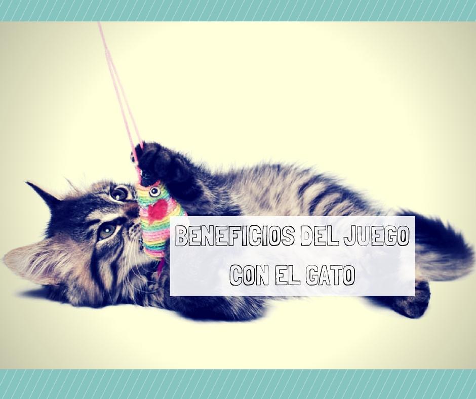 beneficios juego gato
