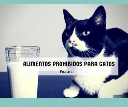 alimentos prohibidos gatos 1