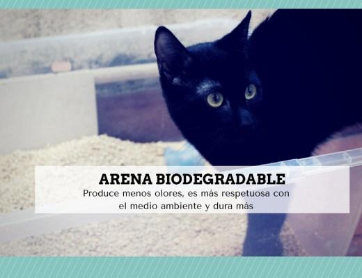 arena biodegradable gatos