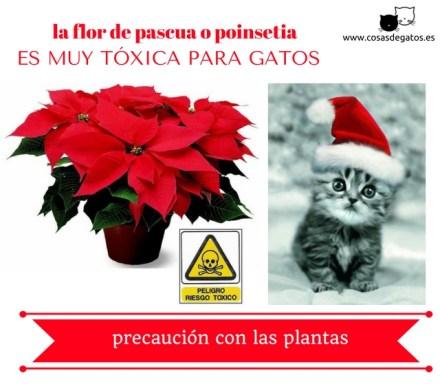 flor de pascua toxica gatos