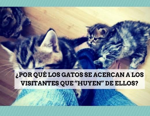 visitantes miedo gatos acercan