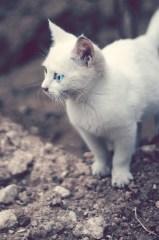 Los gatitos abren los ojos a partir del séptimo día de vida | Foto: obbarg.deviantart.com
