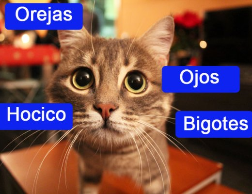 Lukas nos muestra en primer plano cómo son sus ojos, orejas, hocico y bigotes | Foto: www.cosasdegatos.es