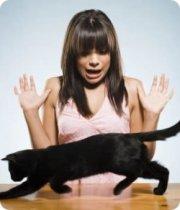 Los que sufren ailurofobia pueden tener ataques de pánico, sudores, alteración en la respiración y taquicardia | Foto: www.gatosdomesticos.com/2011/la-ailurofobia-miedo-a-los-gatos
