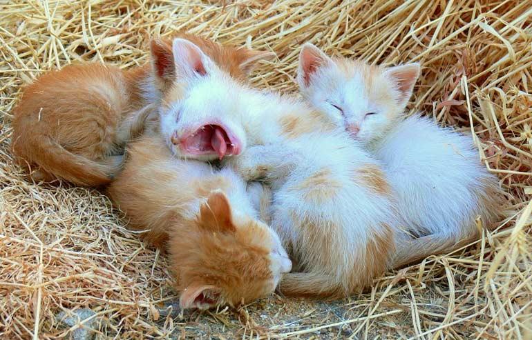 Los gatitos bebé duermen unas 20 horas diarias | Foto: jorapache.deviantart.com