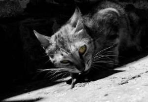 El gato necesita una zona de aislamiento y una de actividad | Foto: mertcheus.deviantart.com