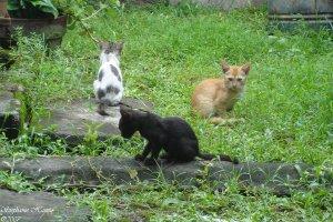 El gato salvaje tiene territorios más amplios que el gato doméstico | Foto: einahpets-otmah.deviantart.com