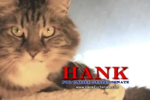 El gato Hank candidato a USA