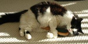 El cepillado del gato ayuda a eliminar la caspa que provoca la alergia | Foto: hero-zero.deviantart.com