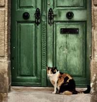 Las casas de acogida temporal de gatos aportan ventajas tanto al minino como a quién lo acoge | Foto: http://pauljavor.deviantart.com