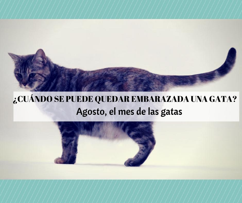 Agosto el mes de las gatas cosas de gatos - Cuidados gato 1 mes ...