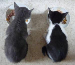 El gato necesitará un cuenco para el agua y otro para la comida | Foto: http://scape07.deviantart.com